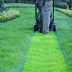 Landscape & Lawn Service