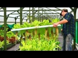 Aquaponics System - $75 -  How We Easily Build Aquaponics Garden